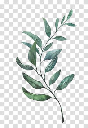 Pintura em Aquarela Desenho Folha Gravura, Aquarela deixa, planta de folhas verdes PNG clipart