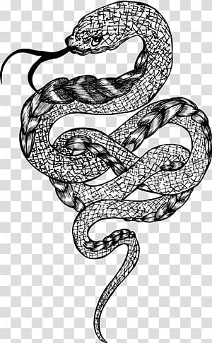 ilustração de cobra, cascavel jibóia constrictor, cobra enrolada PNG clipart