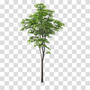 Árvore de paisagem, árvore de primeiro plano de paisagem, de árvore de folhas verdes com fundo azul png