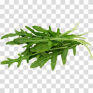Rúcula Alimento biológico Alface Folha vegetal Salada, Rúcula png
