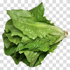bok choy verde, alface romana sanduíche de alface Celtuce sopa de alface, alface Romaine png