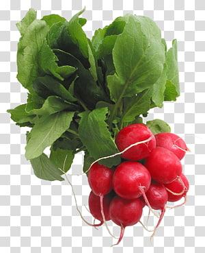 frutas vermelhas redondas com folha verde, rabanete crucíferos, rabanetes PNG clipart