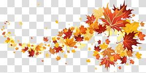 maple leaves illustration, outono, folhas de outono PNG clipart