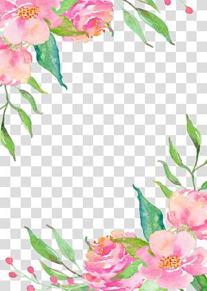 Bordas de flores rosa, pintura de flores rosa png