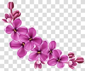 Flor, decoração floral rosa primavera, pintura de flores roxas png