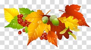 Folha de outono cor, folhas de outono e bolotas decoração, ilustração de folha vermelha e marrom PNG clipart