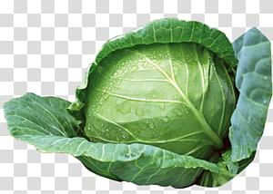 planta de repolho verde, repolho vegetal, repolho verde png