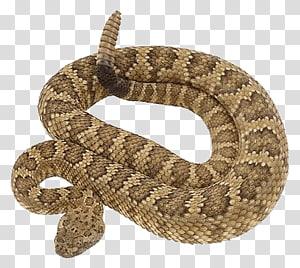 víboras de cascavel, cobra PNG clipart