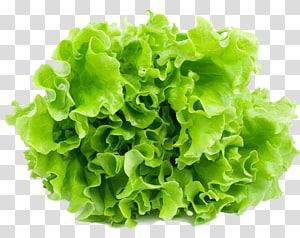 Alface iceberg Vegetal de folha Salada Alface romana Endívia, alface png