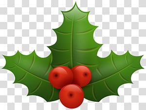 visco, azevinho comum Papai Noel Natal, azevinho de Natal png