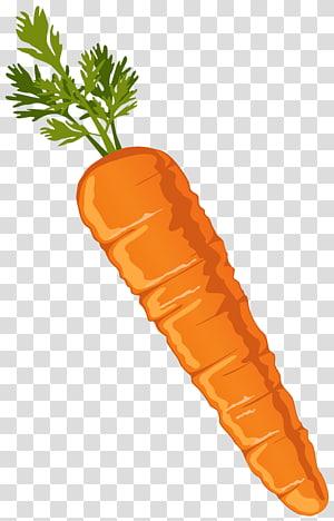 cenoura laranja, cenoura vegetal, cenoura PNG clipart