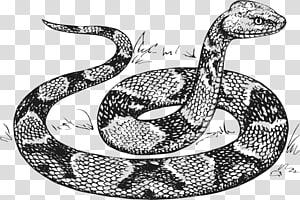 Desenho de cobra cobra, anaconda PNG clipart