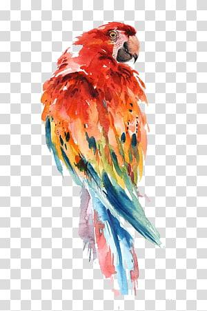 arte arara escarlate, papagaio pintura em aquarela pássaro desenho arte, papagaio png