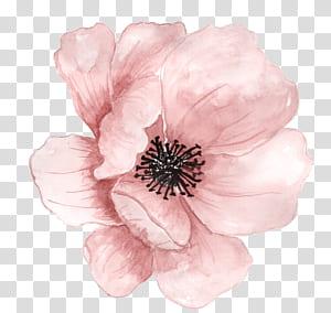 Pintura em aquarela, flores pintadas à mão-de-rosa, flor rosa PNG clipart