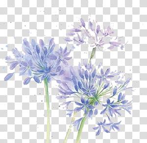 Design floral Flores cortadas Crisântemo Azul, Flores em aquarela, lírio roxo das flores Incas PNG clipart