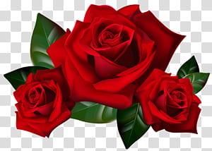 Rosa, rosas vermelhas, rosas vermelhas arte em 3D PNG clipart