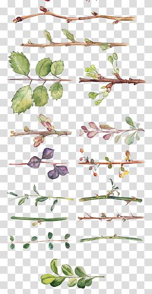 Flor Pintura em aquarela Desenho Design floral, Todos os tipos de folhas e galhos pintados à mão em aquarela, coleção de ilustração de galho PNG clipart
