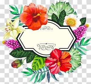 Quadro de flor, pintados à mão em aquarela fronteiras tropicais, floral png