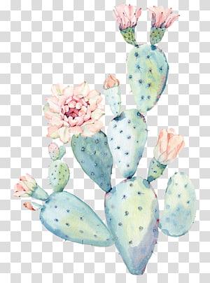 cacto da cerceta, saguaro da pintura da aguarela do cactaceae, cacto png
