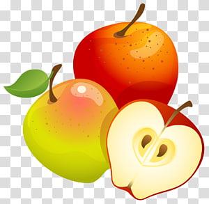 maçãs, árvores frutíferas euclidianas, grandes maçãs pintadas png