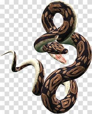 cobra preta e marrom, réptil de lagarto de cobra, cobra PNG clipart