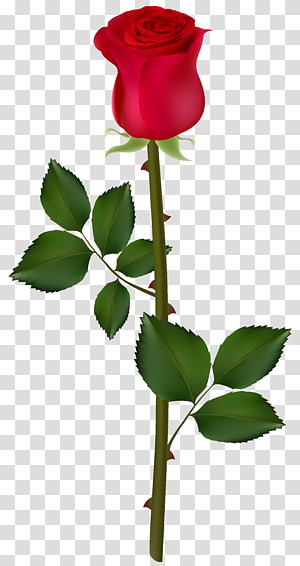 ilustração de flor rosa vermelha, gráficos de rosa, rosa vermelha PNG clipart