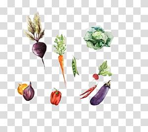 legumes variados, vegetais de raiz pintura em aquarela desenho ilustração, uma variedade de vegetais PNG clipart