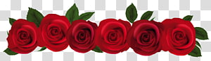 Rosa vermelha, rosas vermelhas, ilustração de sete flores rosas vermelhas PNG clipart