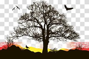 silhueta da ilustração de árvores e pássaros, pôr do sol PNG clipart