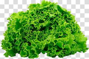 alface verde, legume de folhas Salada alface Butterhead alface iceberg alface romana, produto png
