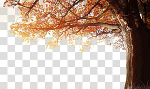 ilustração de árvore folheada marrom, resolução 4K 1080p Outono, inverno outono árvore outono PNG clipart