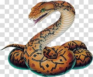 cobra marrom e preto, cobra víboras bola python desenho esboço, cobra PNG clipart