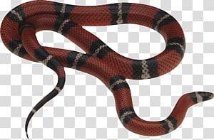 cobra listrada vermelha e cinza, víbora de cobra de milho cobra escala, cobra gucci PNG clipart