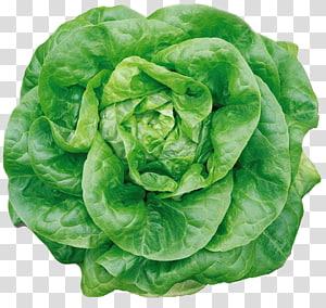 arte vegetal verde, alface Iceberg alface Butterhead alface Romaine endívia, alface Butterhead png