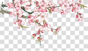 Pixel, flor de pêssego em aquarela pessegueiro, rosa floração png