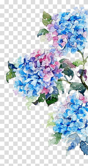 Pintura em aquarela Desenho de flores, Flores em aquarela, pintura de flores azuis e rosa PNG clipart