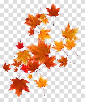folha de outono laranja e vermelha, folha de outono, folhas de outono PNG clipart