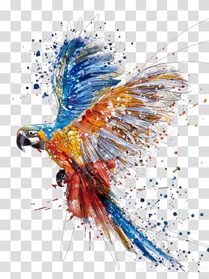 Pintura em aquarela Desenho ilustração, Respingo de pássaros coloridos papagaio mão, pintura de arara png