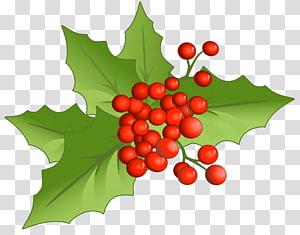visco arte gráfica, Holly Aquifoliales Alimentos naturais Frutas Natal, Natal Visco grande png
