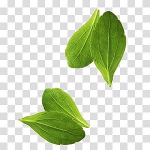 quatro folhas verdes, vegetais de folhas manjericão vegetais de folhas, folhas PNG clipart