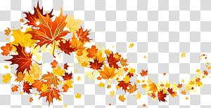Folha de outono cor, folhas de outono, folhas de plátano ilustração PNG clipart