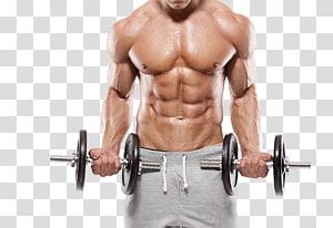 homem vestindo shorts cinza levantando par de halteres pretos, exercício físico Musculação Musculação aptidão física Fitness Center, aptidão muscular png