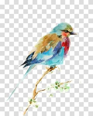pássaro azul e vermelho empoleirar-se na pintura de galho de árvore, pintura em aquarela de pássaro desenho gravura, pássaros png