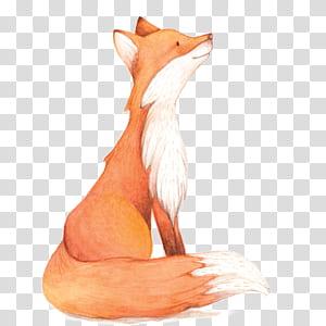 Pintura em aquarela Fox, raposa aquarela, ilustração de raposa png