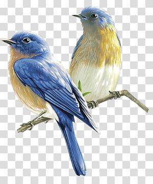 Ilustração de pássaros, pássaros, dois pássaros de bico azul e amarelo png