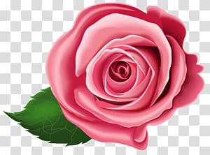 Ilustração rosa vermelha PNG clipart