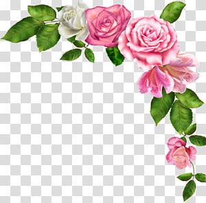 flores cor de rosa, bordas e quadros flores cor de rosa, flor em aquarela PNG clipart