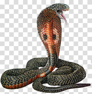 cobra de cobra preta e marrom, cascavel réptil cobra indiana, afeiçoado PNG clipart