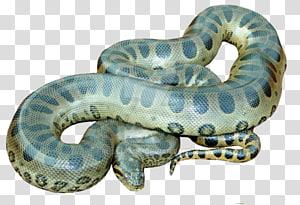 cobra anaconda verde, anaconda PNG clipart