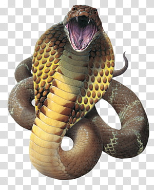 cobra marrom, cobra rei cobra réptil Gaboon viper, arquivo cobra cobra PNG clipart